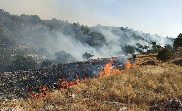 وقوع آتش سوزی در جنگل های اندیکا